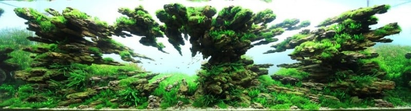 underwater-art-aquascaping-09-1024x277