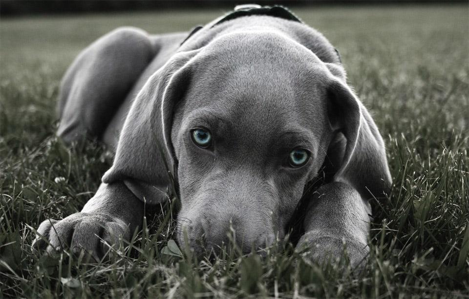 Beautiful-Dog-Photos-03