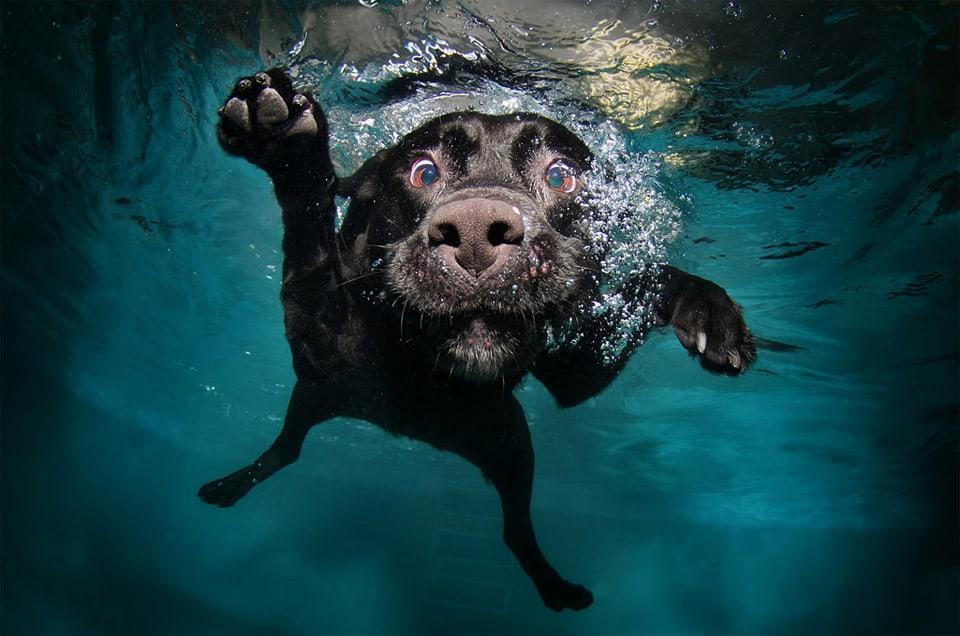 Beautiful-Dog-Photos-06
