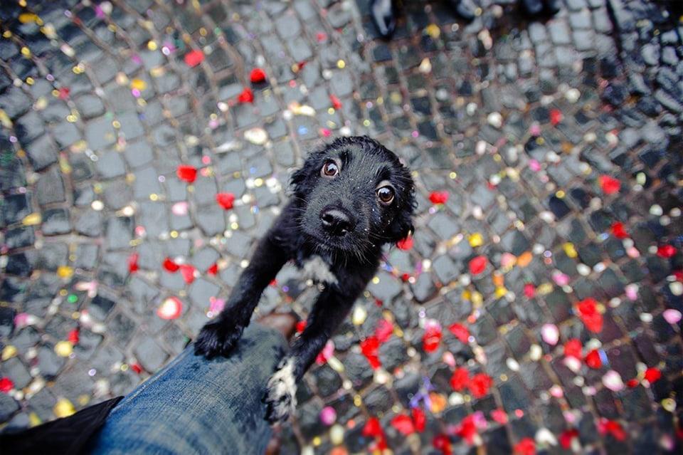 Beautiful-Dog-Photos-10