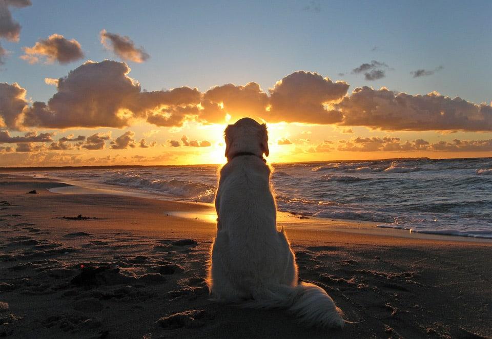 Beautiful-Dog-Photos-12