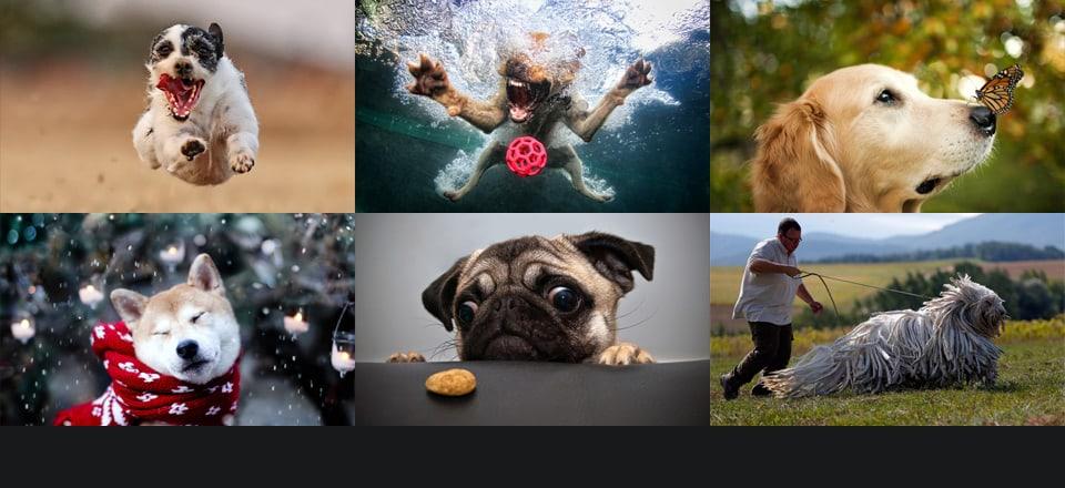 Beautiful-Dog-Photos-13