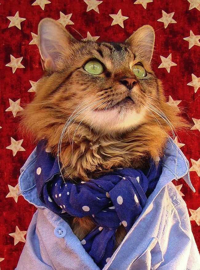 Lorenzo_the_Cat_by_Joann_Biondi_2014_02