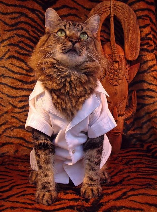 Lorenzo_the_Cat_by_Joann_Biondi_2014_05