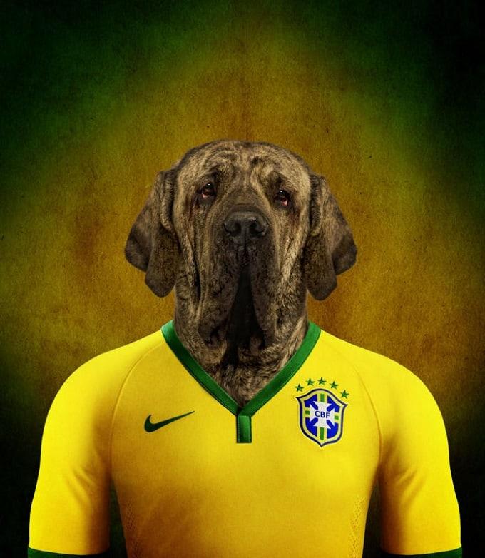 sobaki-i-futbol-12