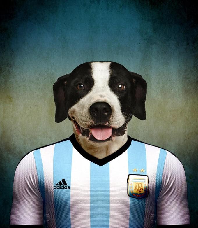 sobaki-i-futbol-7