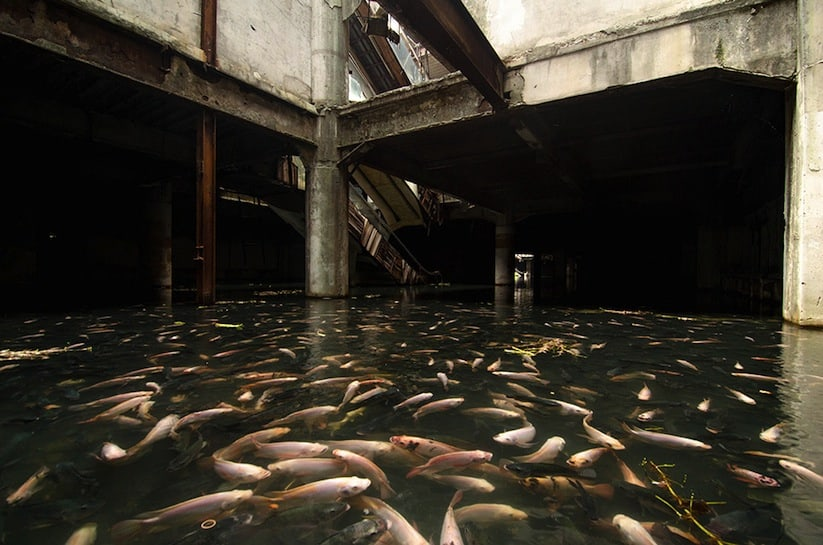Abandoned_Shopping_Mall_In_Bangkok_Has_Been_Taken_Over_By_Fish_2014_02