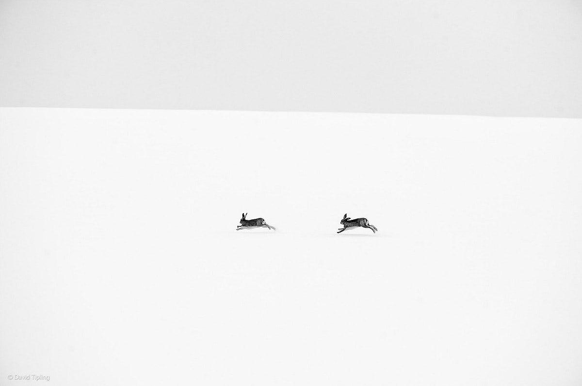 Wildlifephotographer13