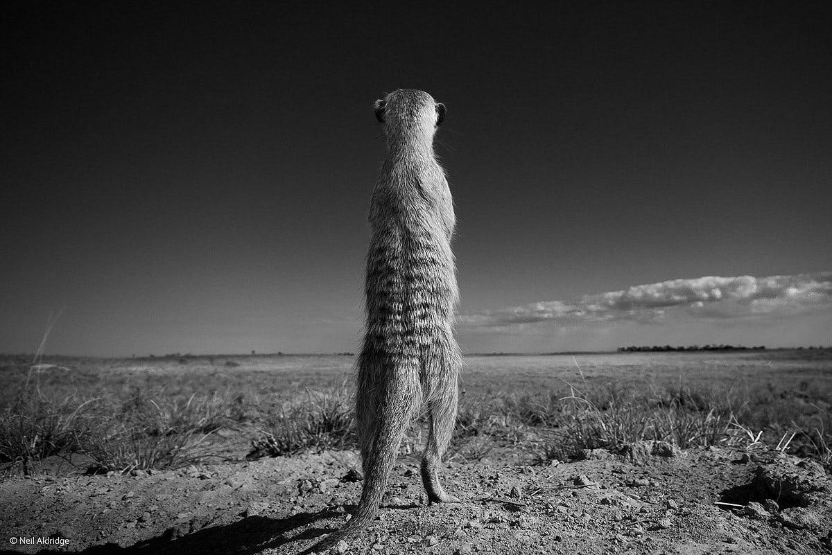 Wildlifephotographer18
