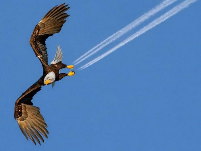 eagle-perfect-timing