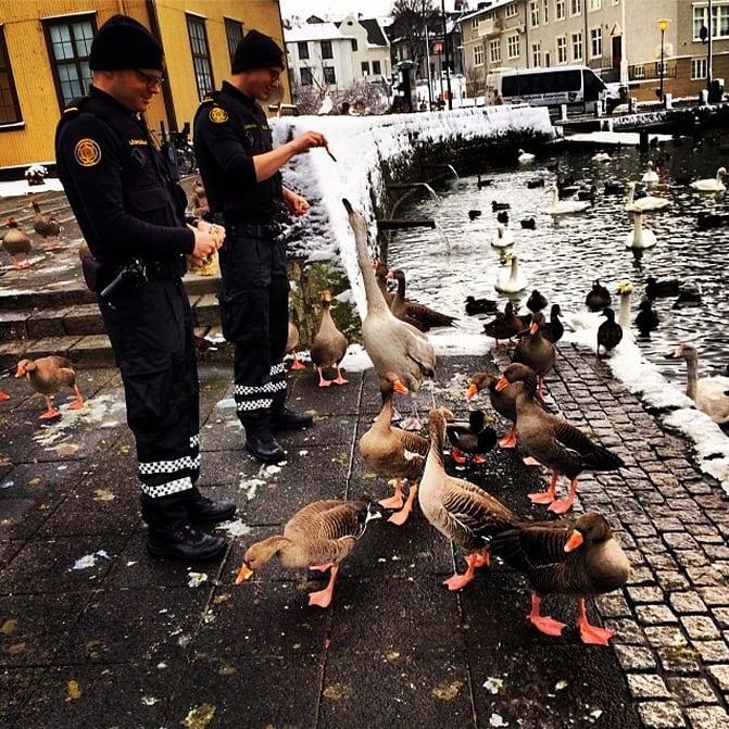Icelandic Police 2