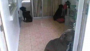 funny pet shaming 10 03 2014 1 2