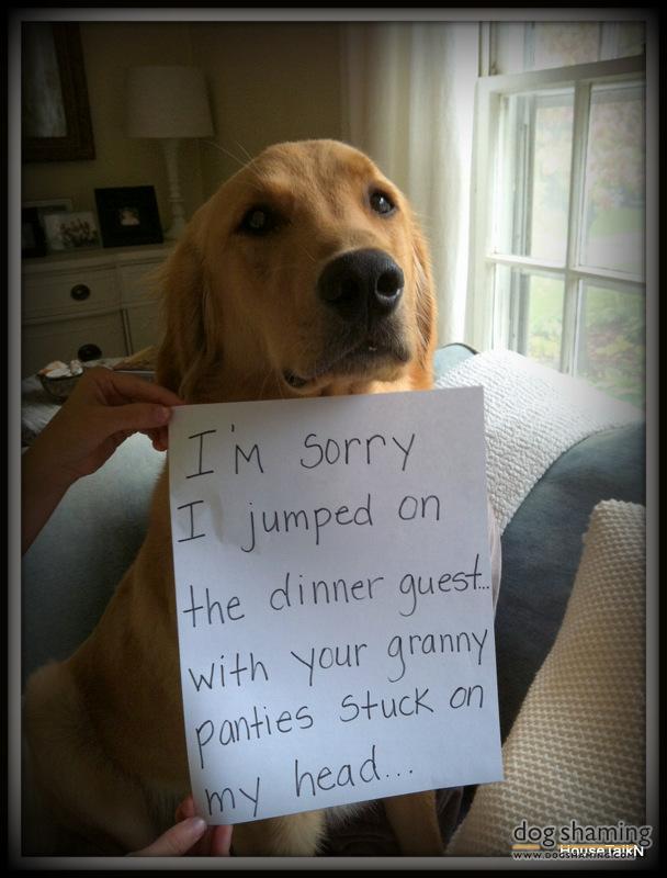 funny-pet-shaming-10-03-2014-12
