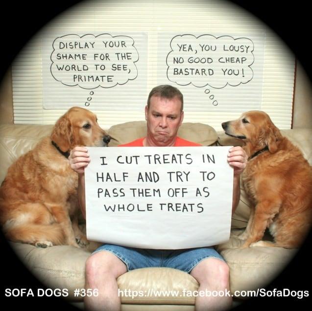 funny-pet-shaming-10-03-2014-17