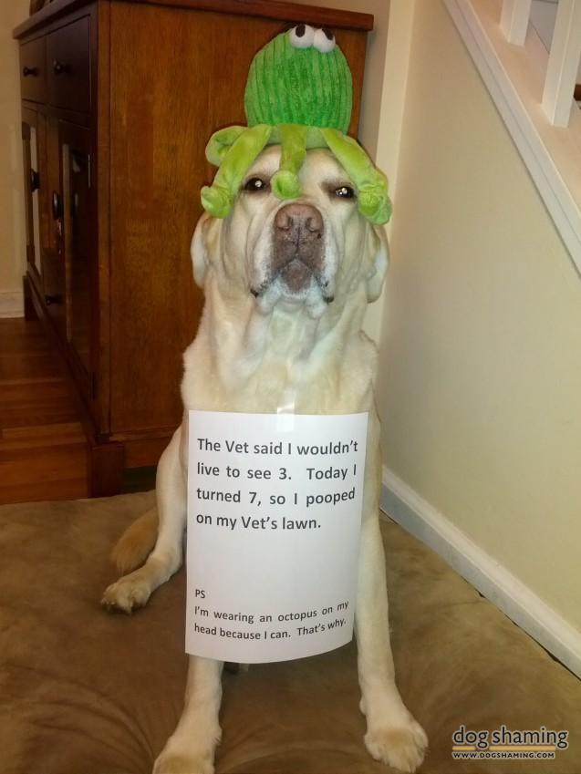 funny-pet-shaming-10-03-2014-20