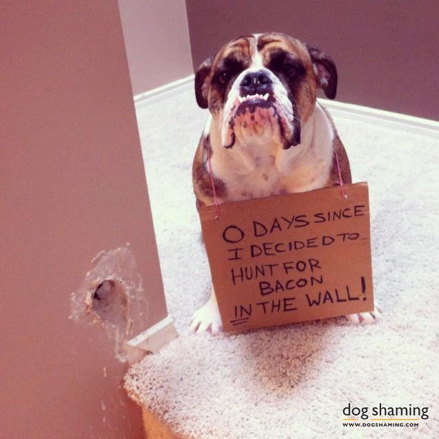 funny-pet-shaming-10-03-2014-5
