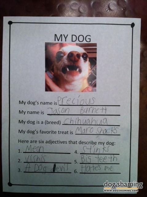 funny-pet-shaming-10-03-2014-7