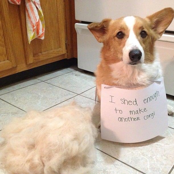 funny-pet-shaming-10-03-2014-8