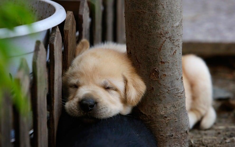 sleepingpeople14
