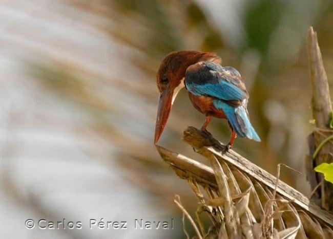 10431410-R3L8T8D-650-wildlife-photography-carlos-perez-naval-3