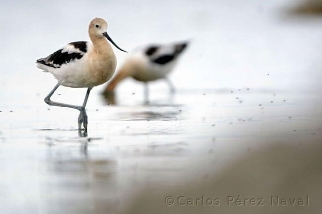 10431710-R3L8T8D-650-wildlife-photography-carlos-perez-naval-2