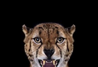 Amazing Studio Portraits of Wild Animals by Brad Wilson 1
