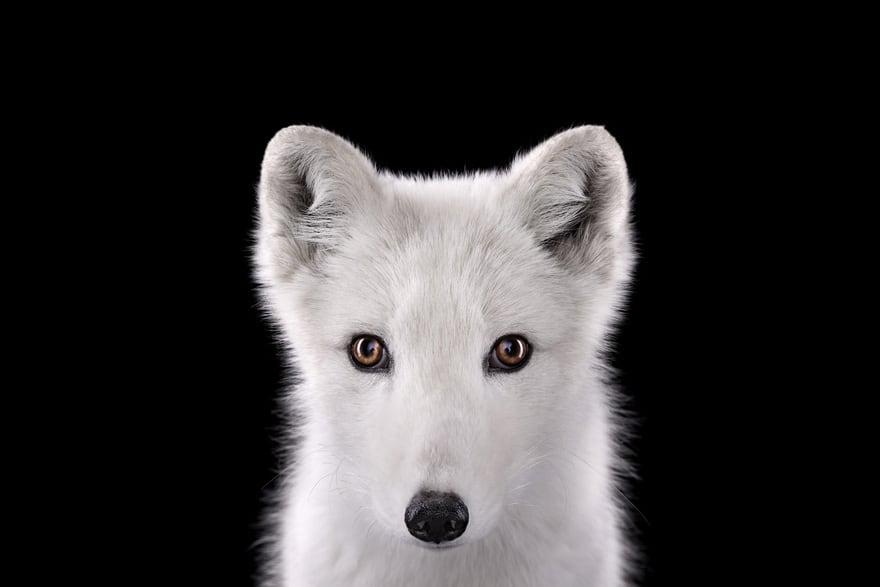 Incredible Studio Portraits Of Wild Animals By Brad Wilson: Amazing Studio Portraits Of Wild Animals By Brad Wilson