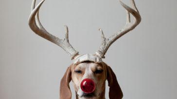 Maddie Deer2 1