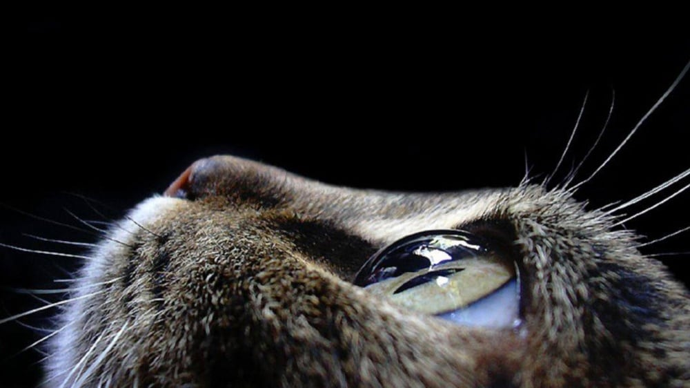 11519360-R3L8T8D-1000-animals-pictures-cat-eyes-macro-photog