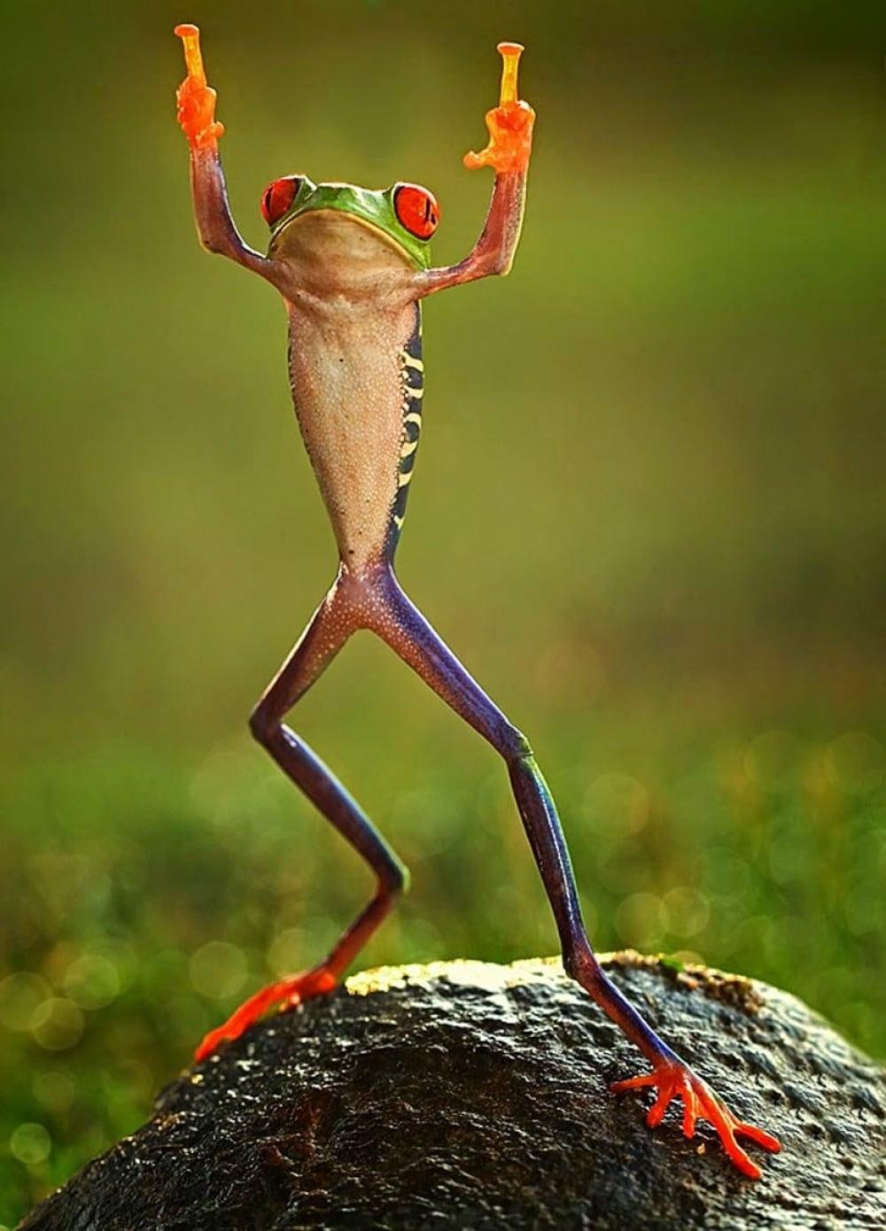 11523210-R3L8T8D-1000-0ashikhei-goh-of-indonesia-frog-flippi