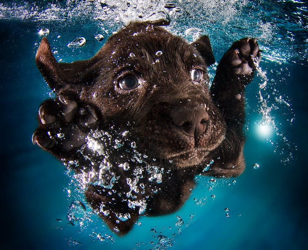 3036127-slide-s-10-feel-the-puppy-love-with-these-underwaterrugerpromo