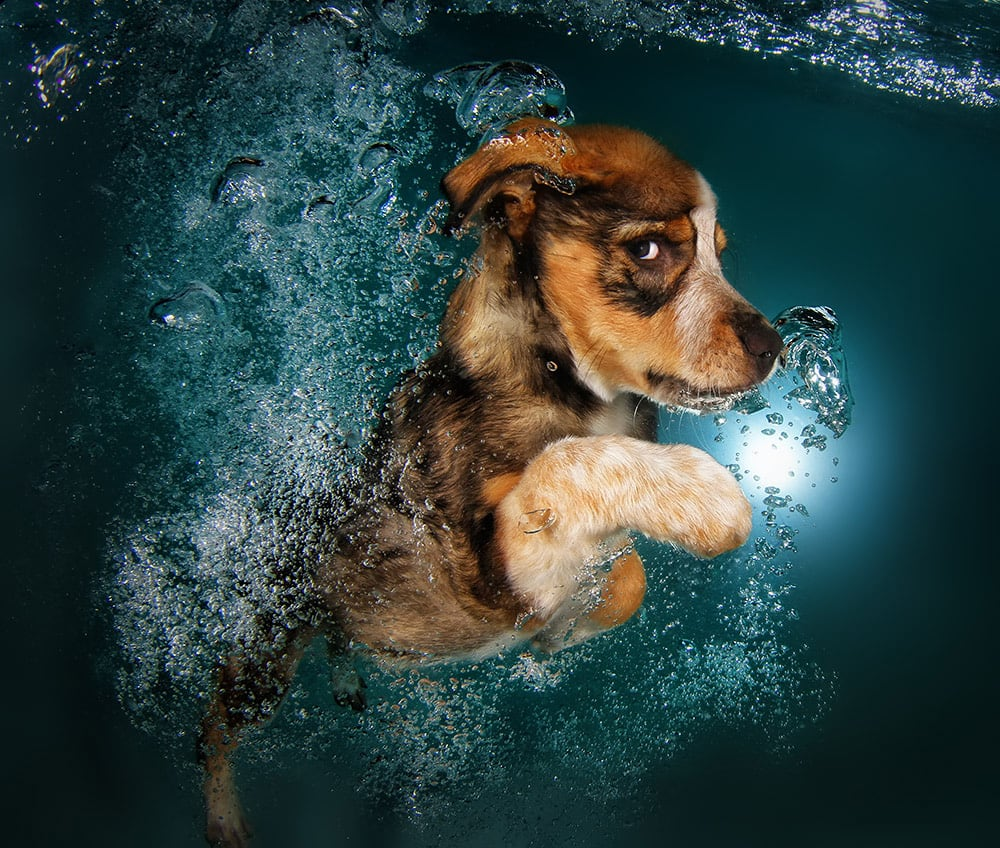 3036127-slide-s-3-feel-the-puppy-love-with-these-underwatergingerpromo