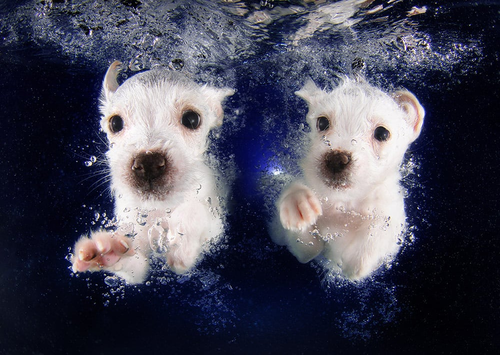 3036127-slide-s-7-feel-the-puppy-love-with-these-underwaterpringlespickmepromo