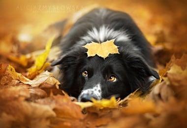 Hearwarming Dog Photographs by 19-Year-Old Polish Photographer 2