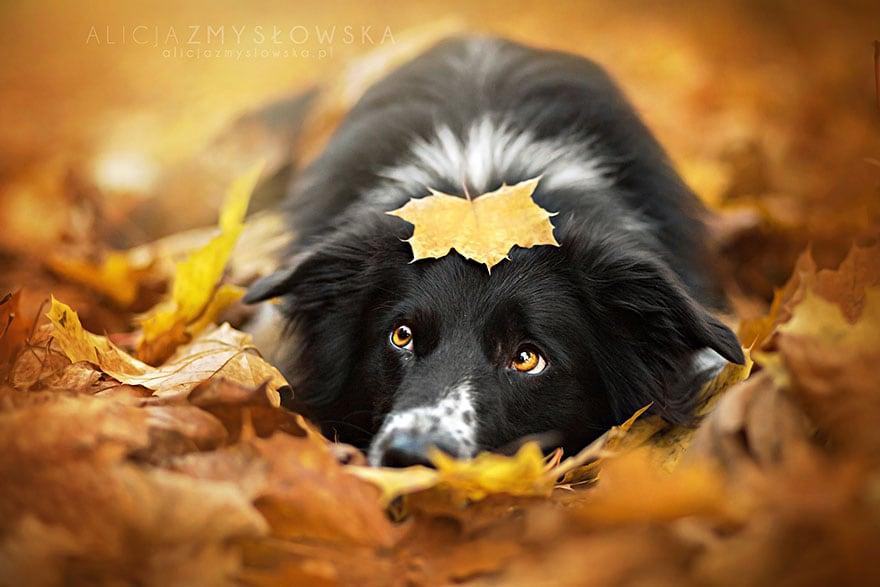 Dogs_by_Alicja_Zmyslowka_02