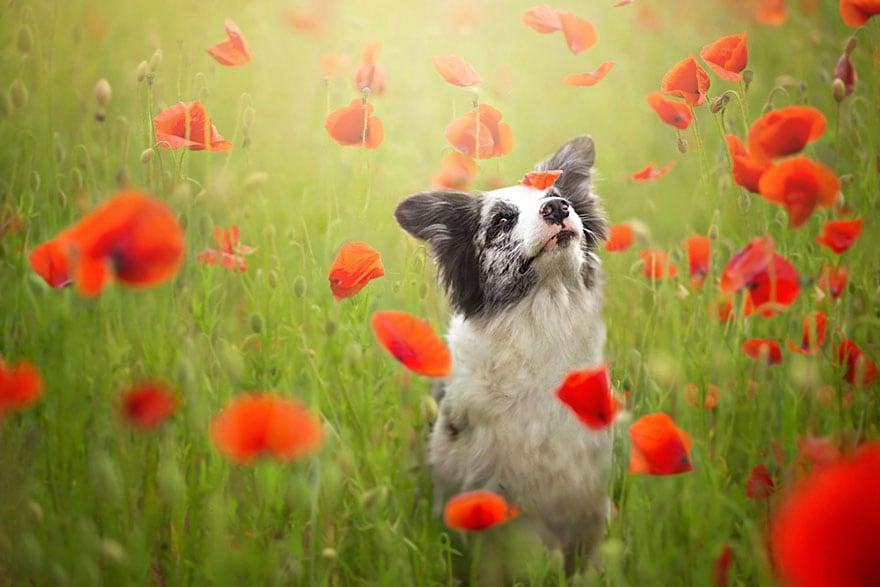 Dogs_by_Alicja_Zmyslowka_03