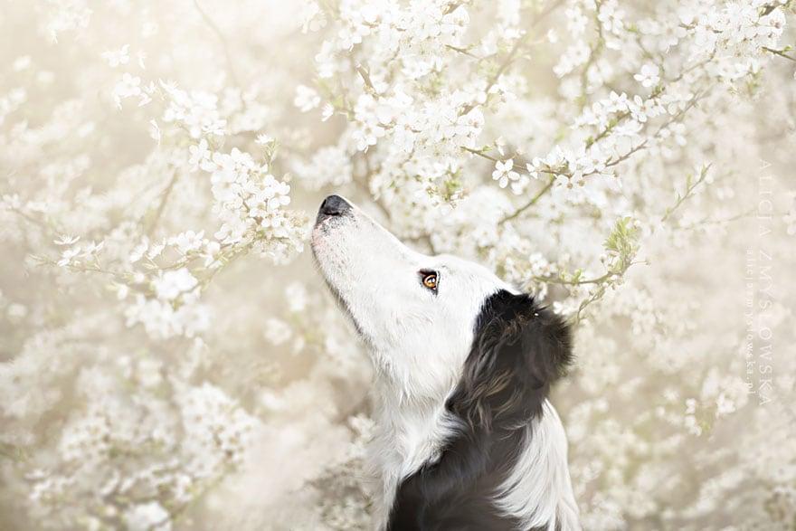 Dogs_by_Alicja_Zmyslowka_05