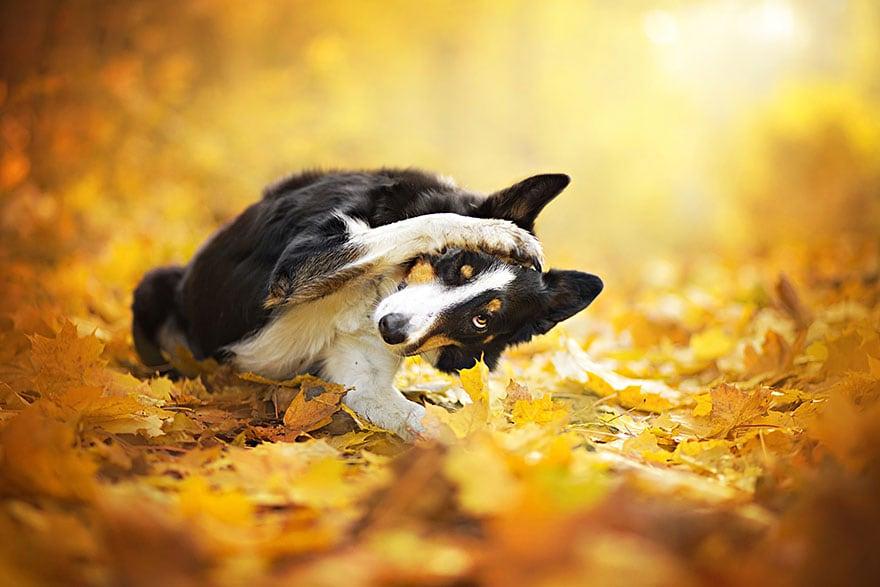 Dogs_by_Alicja_Zmyslowka_06