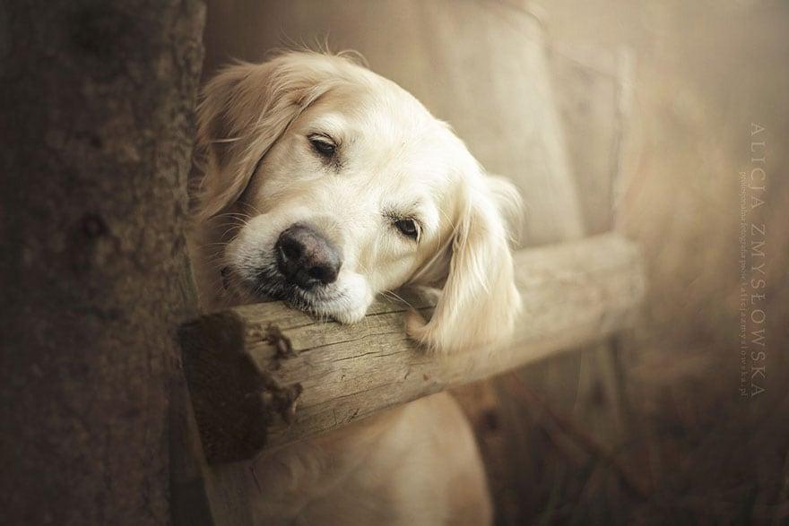 Dogs_by_Alicja_Zmyslowka_09