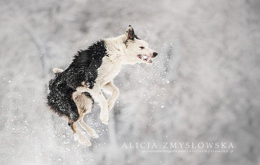 Dogs_by_Alicja_Zmyslowka_10