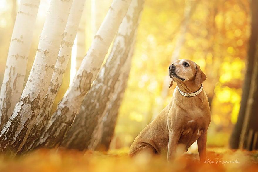 Dogs_by_Alicja_Zmyslowka_13