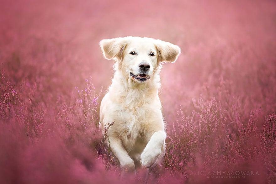 Dogs_by_Alicja_Zmyslowka_14