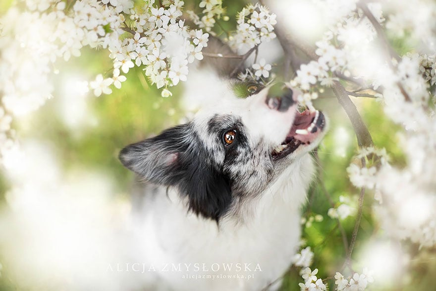 Dogs_by_Alicja_Zmyslowka_15