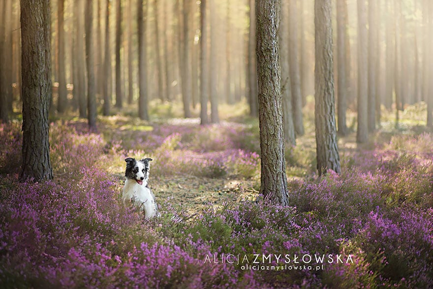Dogs_by_Alicja_Zmyslowka_17