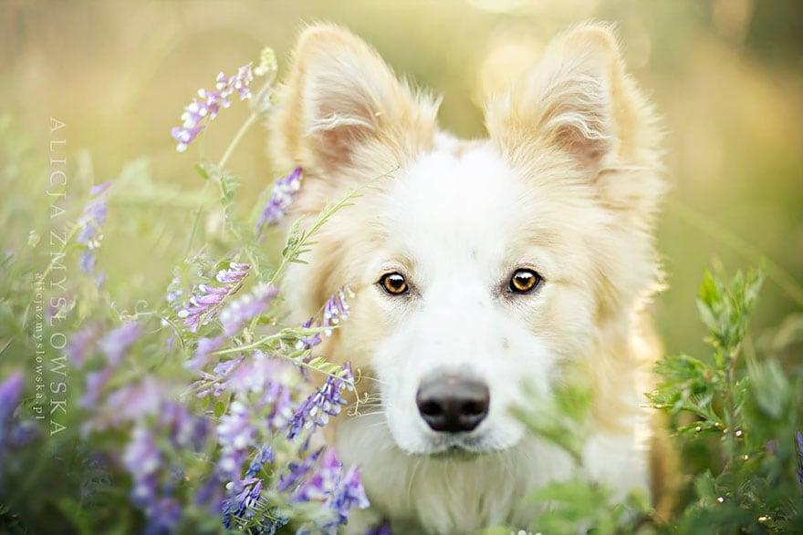 Dogs_by_Alicja_Zmyslowka_18
