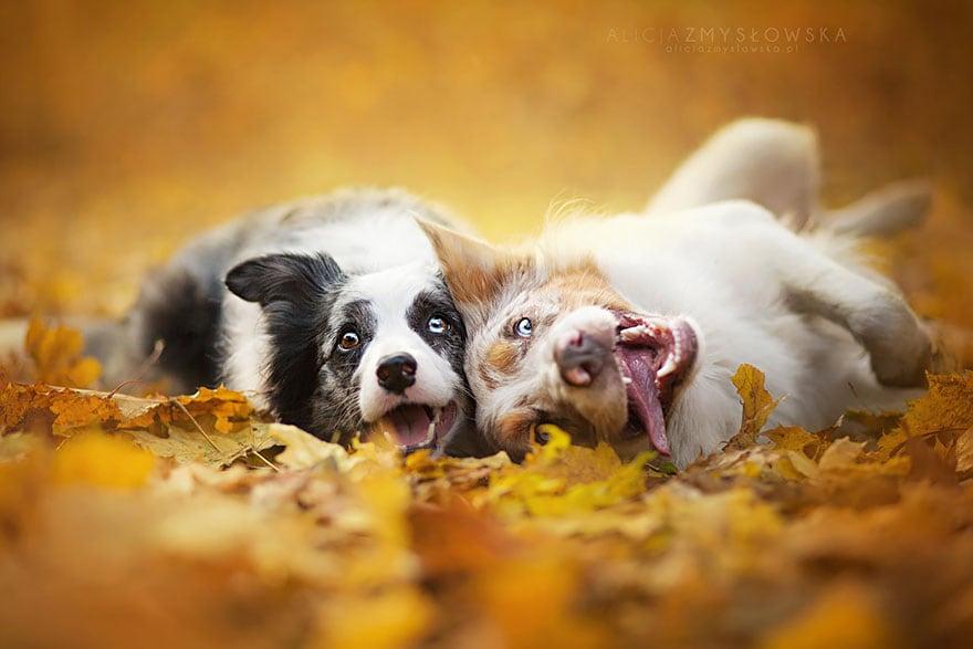 Dogs_by_Alicja_Zmyslowka_19