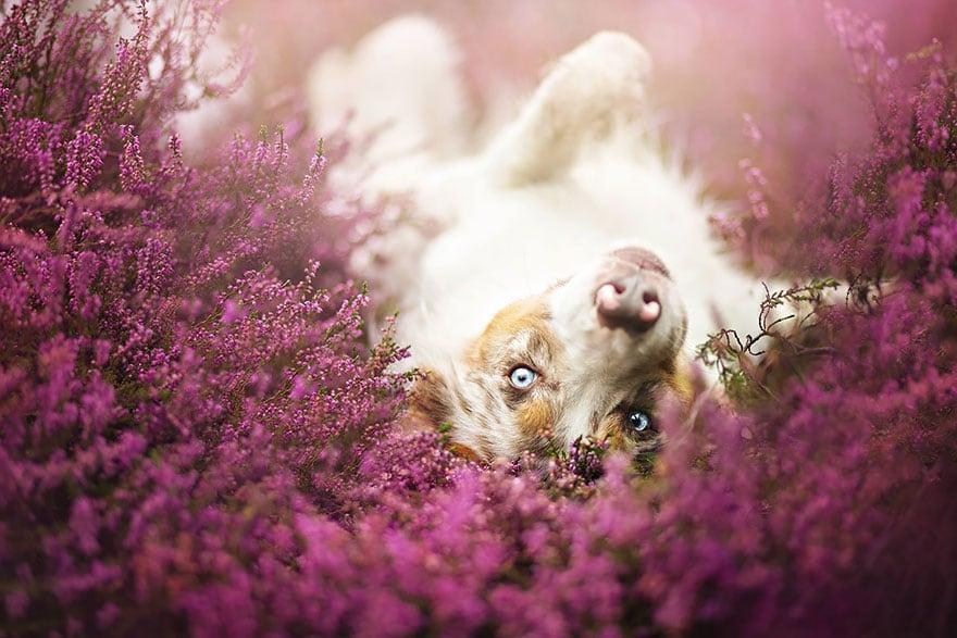 Dogs_by_Alicja_Zmyslowka_20