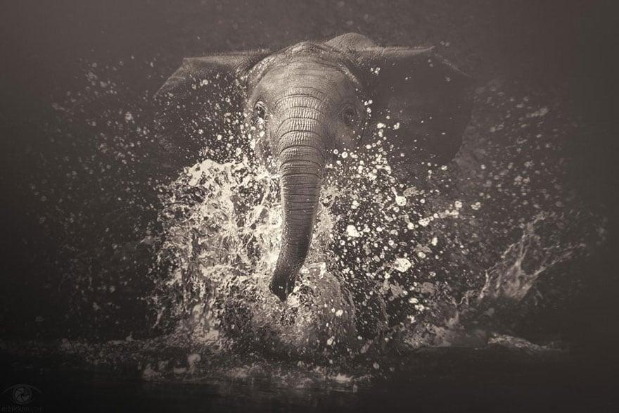 africa-souls-zoo-photography-manuela-kulpa-4