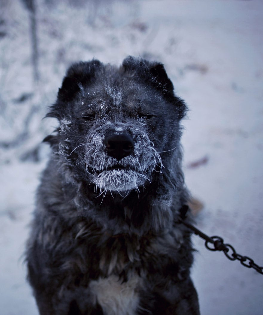 coldest-village-oymyakon-russia-amos-chaple-24