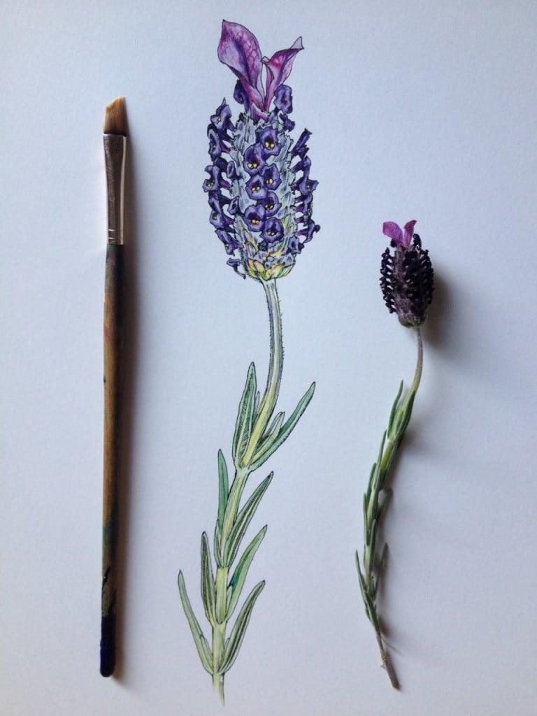 Flowers-in-Progress-A-beautiful-series-of-illustrations-by-Noel-Badges-Pugh-10-768x1024